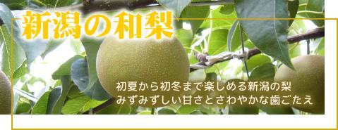新潟の和梨